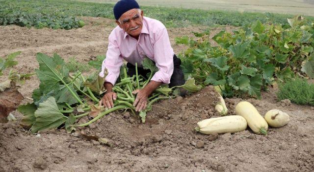 Görenler hayrete kapılıyor... Su ve gübre kullanmadan kıraç toprakta ürün yetiştiriyor