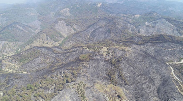 İzmir'de yanan orman alanı Şubat'a kadar ağaçlandırılacak! İlk fidan 11 Kasım'da dikilecek