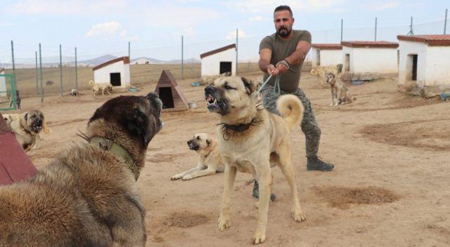 Kangallar, sınırdaki teröristlere geçit vermeyecek