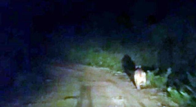 Köylere inen ayılar vatandaşı tedirgin ediyor