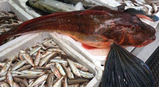Nesli tükenmekte olan balık yıllar sonra ağlara takıldı