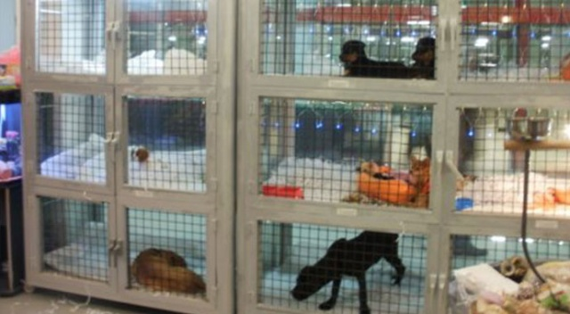 'Petshop'larda hayvan satışı sonlandırılmalı'