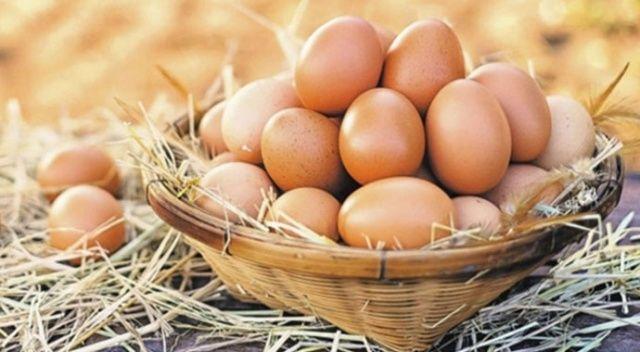 ABD'ye yumurta ihracatı başlıyor