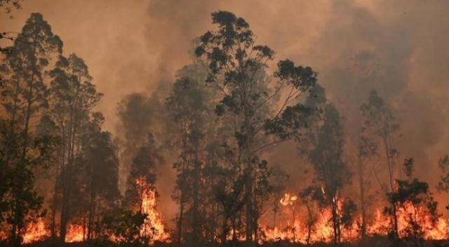 Avustralya'da orman yangınları sürüyor