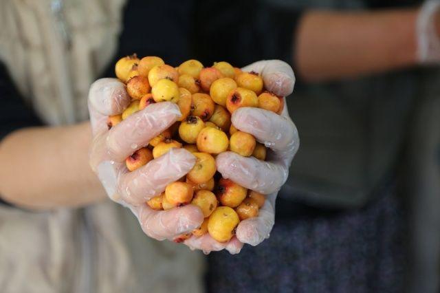 Köyde kadınlar imalathane kurdu, doğal meyvelerle üretime başladı