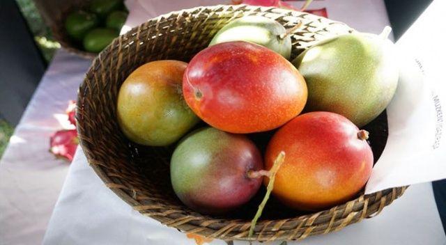 Tanesi 50 liradan satılıyor! Üreticinin yeni gözdesi 'mango'