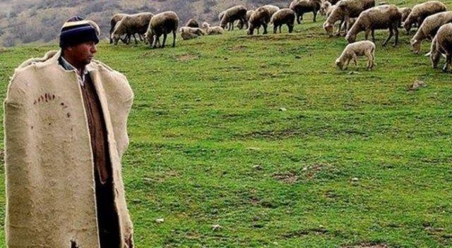 Devletten 62 milyon lira  çoban desteği