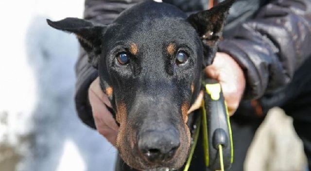 Bakan Pakdemirli'nin sahip çıktığı köpek Bobo katarakt ameliyatı oldu