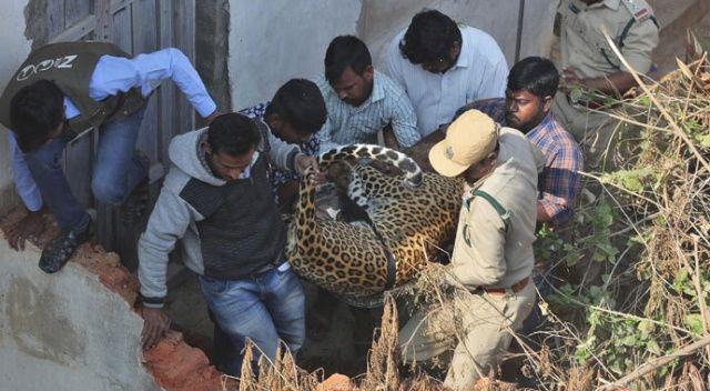 Hindistan'da bir eve leopar girdi! Büyük panik yaşandı