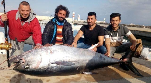 Dev orkinos amatör balıkçıları 8 saat sürükledi