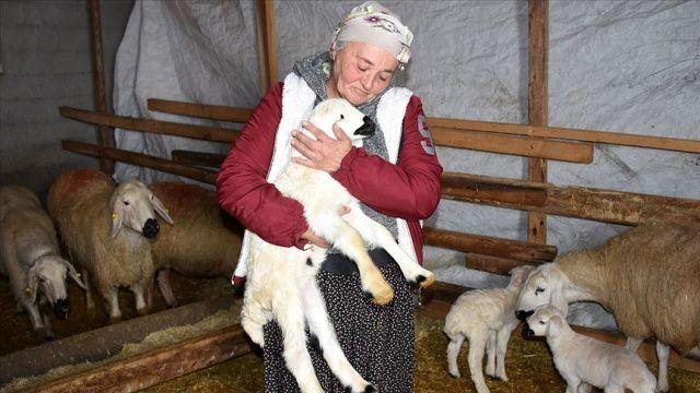 Kadın girişimci hibe koyunlarla kendi çiftliğini ve mandırasını kurdu