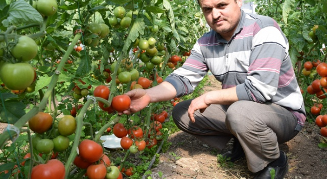Rusya'nın domates alım kotasını artırması Akdenizli...