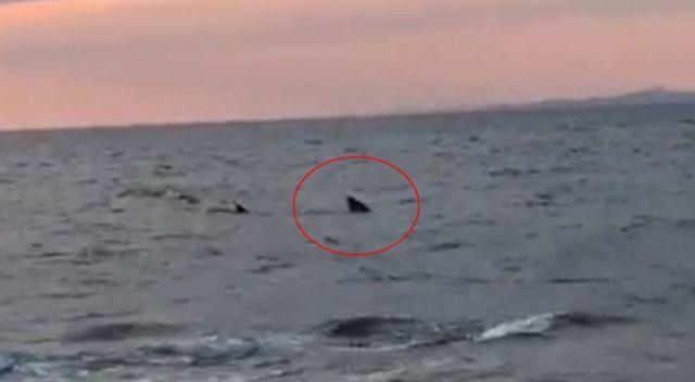 Saros Körfezi'nde kıyı yakınında köpekbalığı paniği