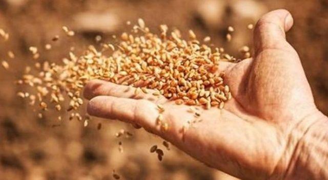 Tarlada-ihracatta tohum seferberliği