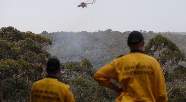 Yangınlar Avustralya'daki ormanların yüzde...