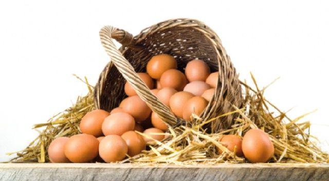 Yumurtada kayıp 160 milyon dolar