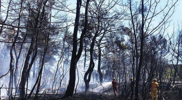 İhmaller sonucu geçen yıl 6 bin 500 hektar orman kül oldu
