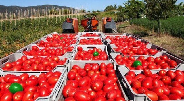 Rusya'ya domates denizden gidecek