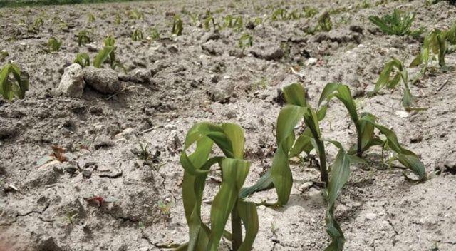 Afyonkarahisar'daki tarım arazileri dondan büyük zarar gördü
