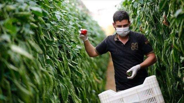 Antalya'da yaş sebze meyve ihracatı yüzde 27 arttı