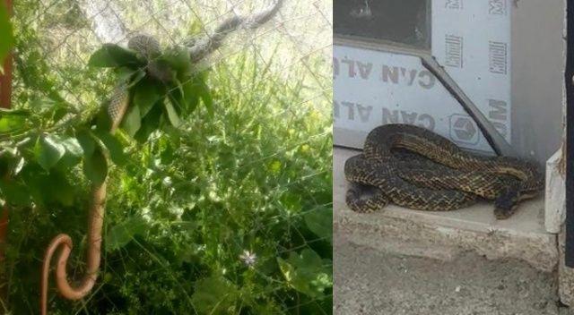 Bursa'yı yılanlar bastı