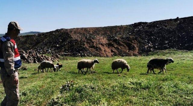 Elazığ'da kayıp koyunlar 9 saat sonra bulundu