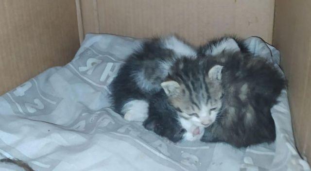 Kediler için ilaç almaya gittiler, döndüklerinde korkunç manzarayla karşılaştılar