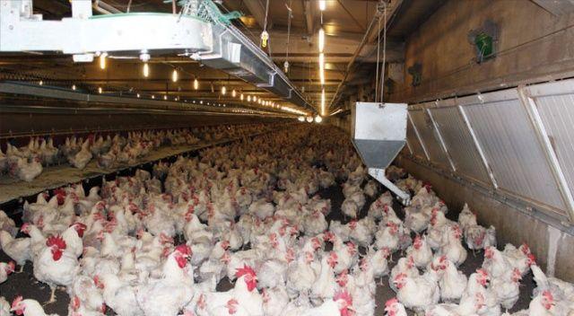 Koronavirüs tavuk ve yumurta sektörünü de vurdu