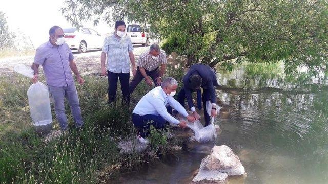 Malatya'da göletlere 50 bin balık bırakıldı