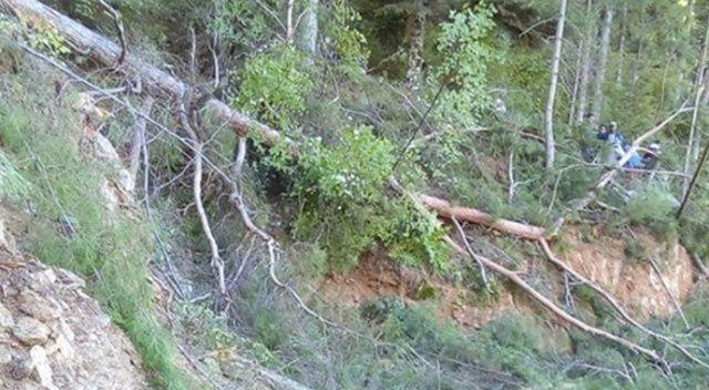 Orman işçisi kestiği ağacın altında kalarak hayatını kaybetti