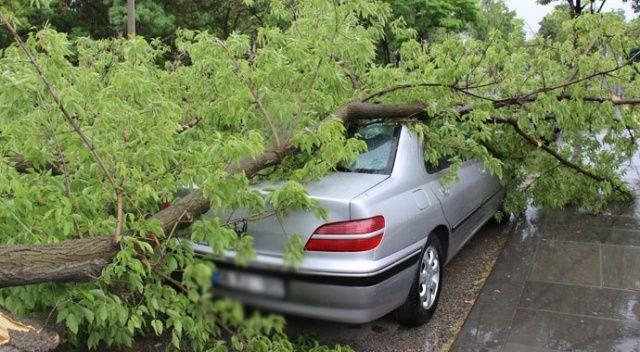 Park yasağı bulunan bölgeye park etti, aracının üstüne ağaç düştü