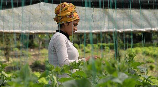 Tarım işçileri iftar saatine kadar seralarda ter döküyor