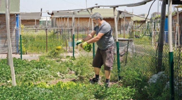 Hobi bahçelerindeki yapılar yıkılacak