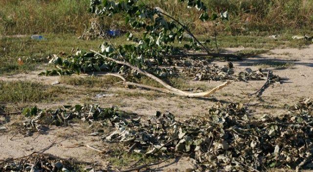 Kendini bilmezler ağaçları tahrip etti