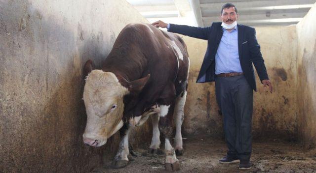 Köyüne kurduğu çiftlikte kazandığı para dudak uçuklatıyor