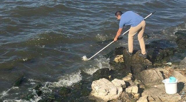 Küçükçekmece Gölü'ndeki balık ölümleriyle ilgili inceleme başlatıldı
