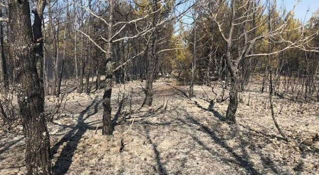 Orman yangınında 6 hektar alan zarar gördü