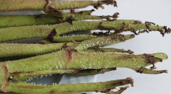 Bu bitki kansere geçit vermiyor! Besin değeri yüksek, kalorisi düşük
