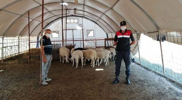 Antalya'dan çaldıkları hayvanları başka bir ilde satarken suçüstü yakalandılar