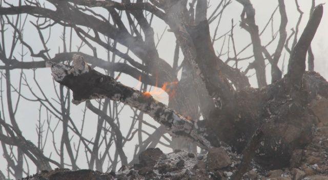 """Bakan Pakdemirli: """"Seferihisar'daki yangın kontrol altında"""""""