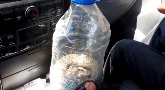 Civcivlerini yiyen yılanı yakaladı