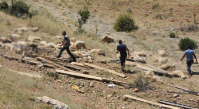 Konya'da kurbanlık taşıyan kamyonun devrilmesi sonucu 100'e yakın koyun telef oldu