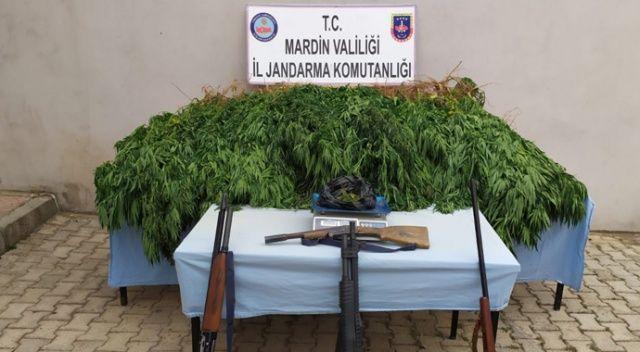 Mardin'de uyuşturucu operasyonu: Tarlasına kenevir eken zanlı tutuklandı