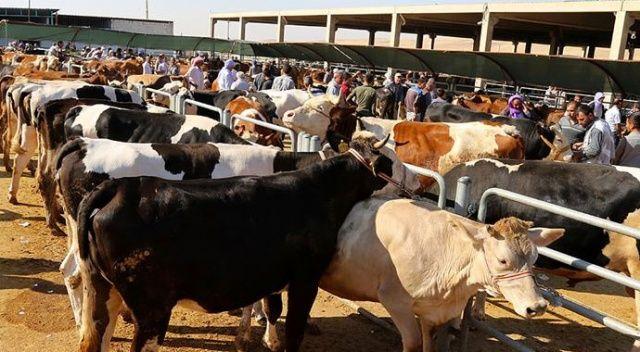 Uzmanı kurbanda sağlıklı et tüketimini anlattı: İlk şartı, sağlıklı hayvan almaktır