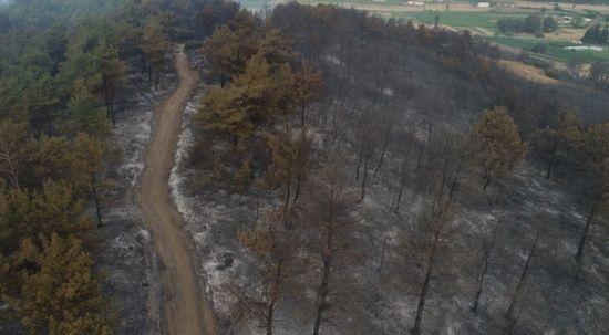 Bakan Pakdemirli: Gelibolu Yarımadası'nda çıkan orman yangını kontrol altına alındı