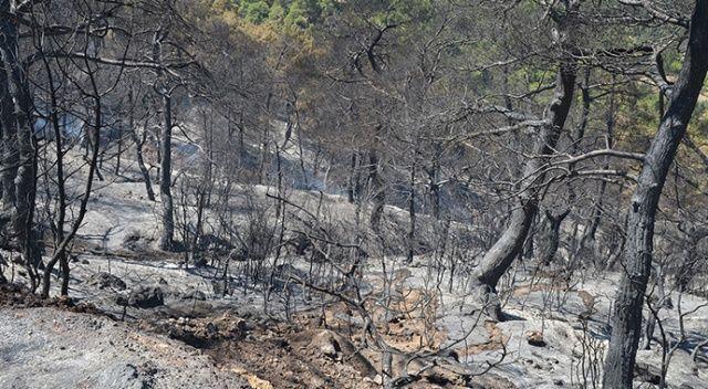 35 hektar orman küle döndü