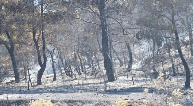 4 gündür sürüyor! Manisa'daki orman yangını tamamen kontrol altına alındı