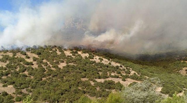 Balıkesir'de orman yangını çıktı!