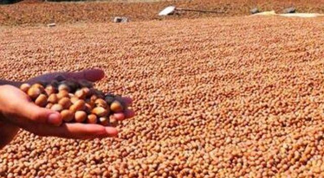 Dünyanın dört bir yanına gıda ürünleri ihraç ettik