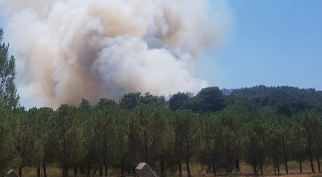 İzmir'de bir orman yangını daha çıktı